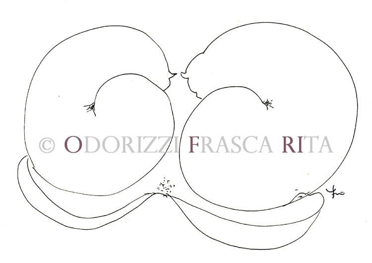 illustrazione_disegno_gatti_ofri