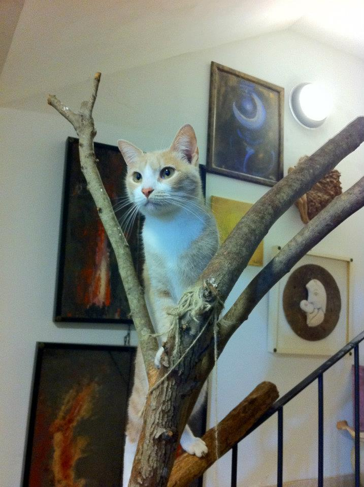 arte_contemporanea_dipinto_a_olio_gatto