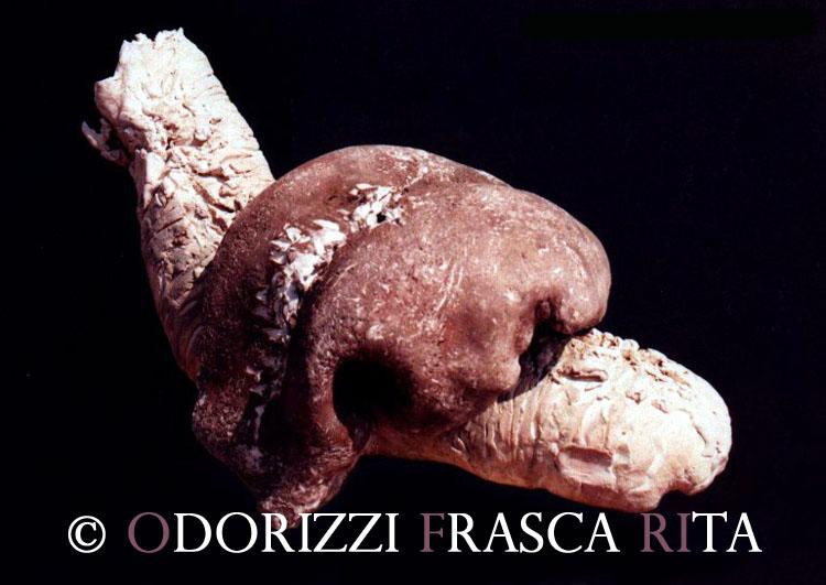 scultura_contemporanea_ofri_serie_sassi_particolare_stadio_lumaca1990